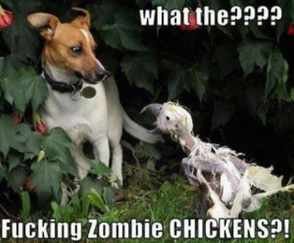 What The???? - Dog humor