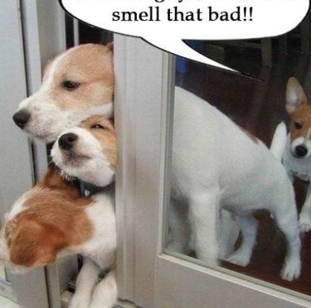 Evacuate! - Dog humor