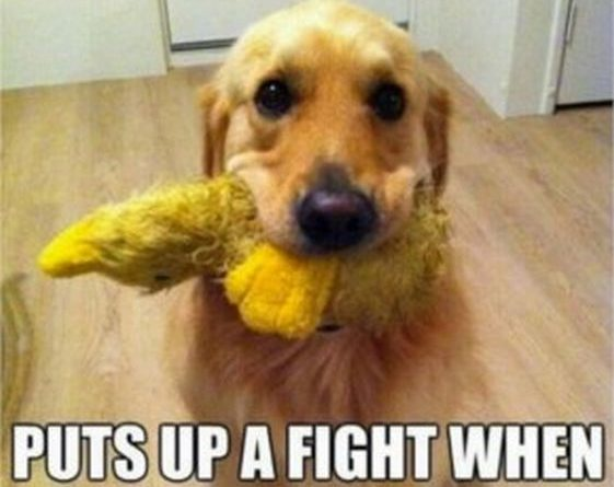 Begs You To Throw Toy - Dog humor