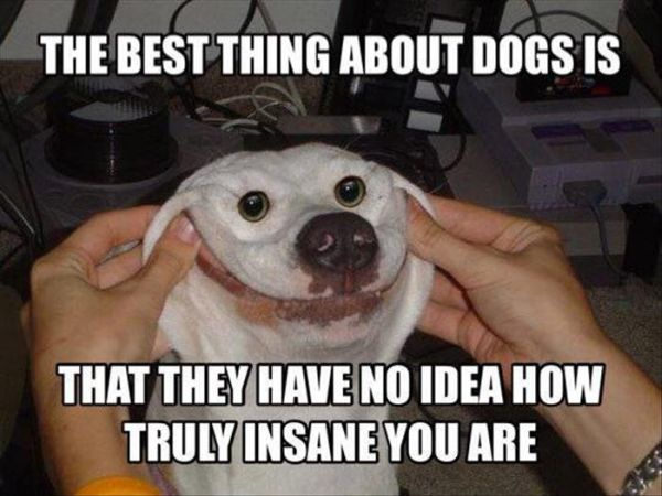 The Best Thing About Dogs - Dog humor