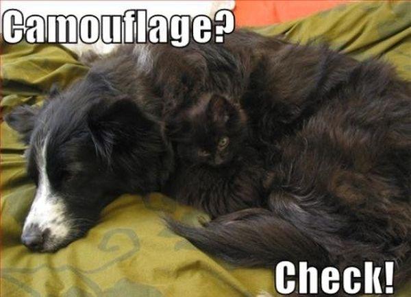 Camouflage? - Dog humor