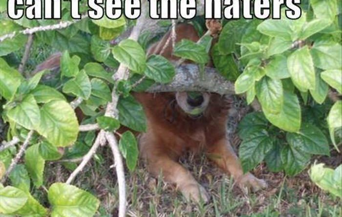 Can't See The Haters - Dog humor
