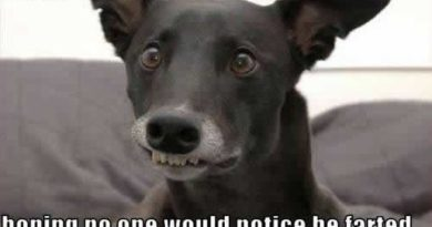 Casual Face - Dog humor