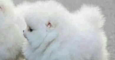 It's A Cloud With Legs - Dog humor