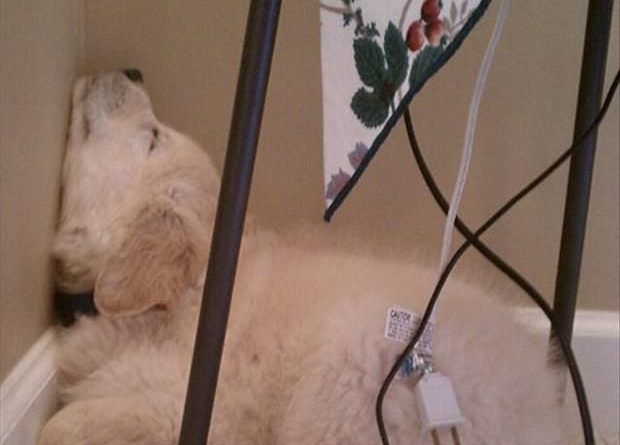 Dogs Can Fall Asleep Anywhere - Dog humor