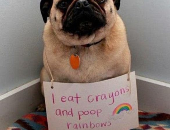 That's What Happens When You Eat Crayons - Dog humor