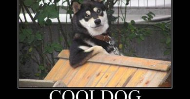 Cool Dog - Dog humor