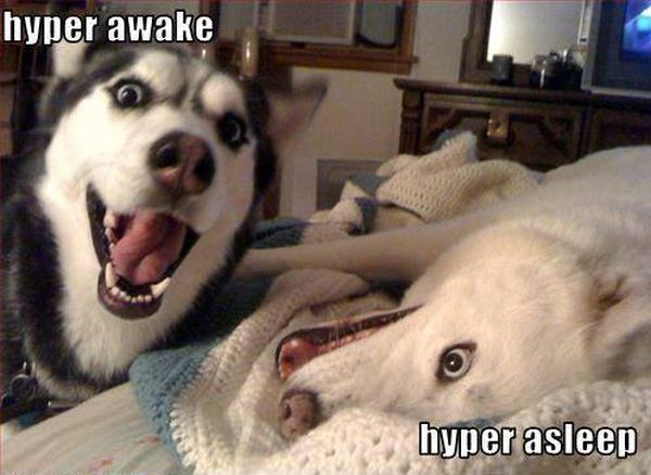 Hyper Awake And Hyper Asleep - Dog humor