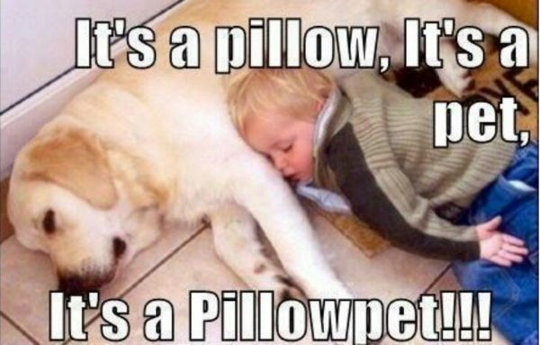 Pillowpet - Dog humor