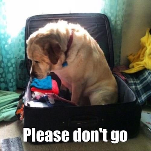 Please Don't Go - Dog humor