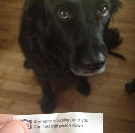 Someone Is Looking Up To You... - Dog humor