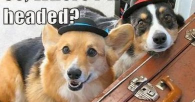 We Are Ready - Dog humor