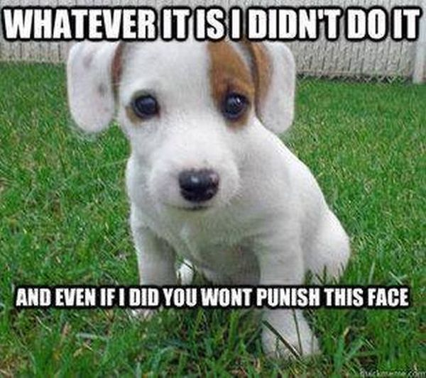 Whatever It Is I Didn't Do It - Dog humor