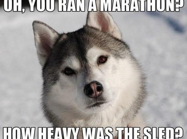 Oh, You Ran A Marathon? - Dog humor