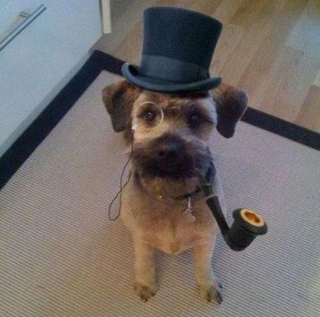 Good Day Sir - Dog humor