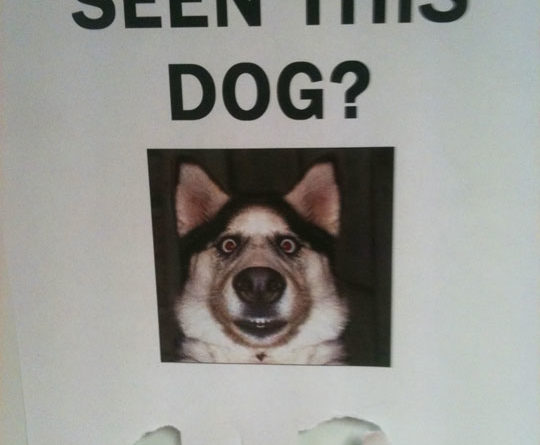 Have You Seen This Dog? - Dog humor