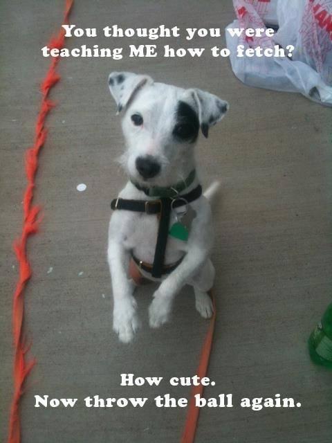 How Cute - Dog humor
