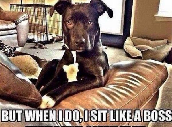 I Don't Always Make A Mess - Dog humor