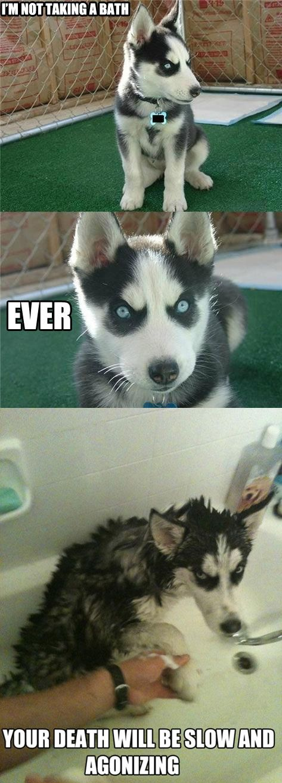 I'm Not Taking a Bath - Dog humor