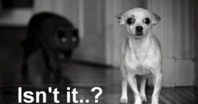 It's Behind Me... - Dog humor