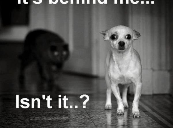It's Behind Me... - Dog humor