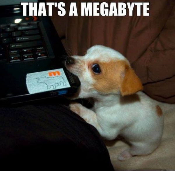 That's A Megabyte - Dog humor