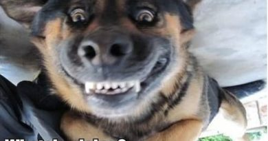 Oh... Hi! - Dog humor
