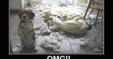 Look What Cat Did - Dog humor