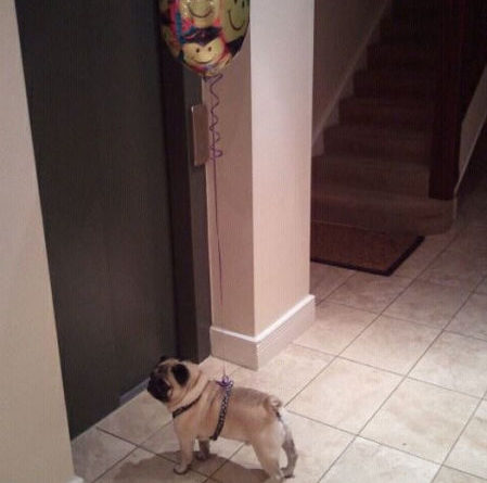 Party Pug - Dog humor