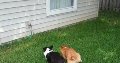 Pee Buddies - Dog humor