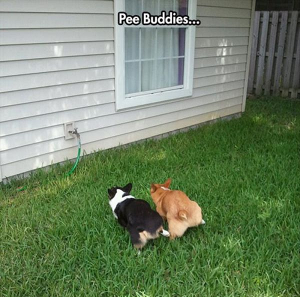 Pee Buddies - Dog humor
