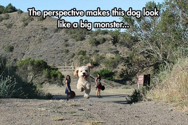 Perspective... - Dog humor
