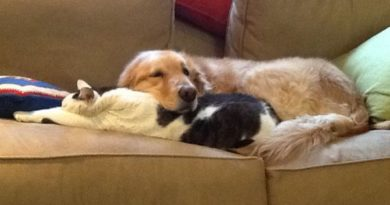 Pillow Kitty - Dog humor