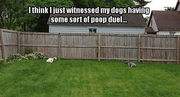 Poop Duel - Dog humor
