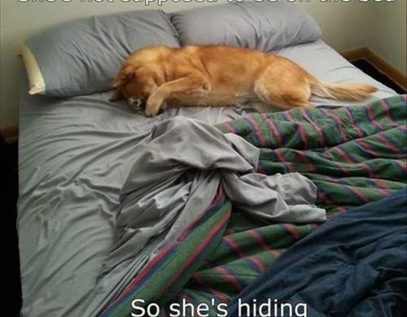 Stealth Level - Dog - Dog humor