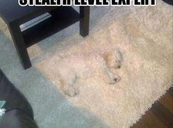 Stealth Level: Expert - Dog humor