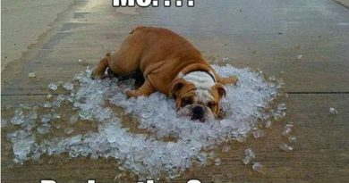 Summer Is Here - Dog humor