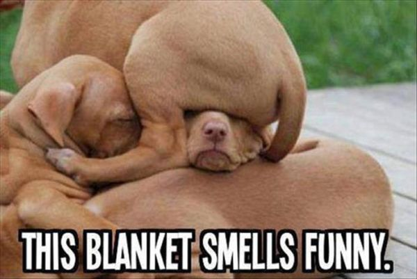 This Blanket Smells Funny - Dog humor