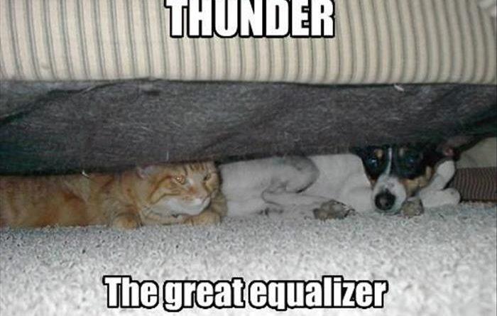 Thunder - Dog humor