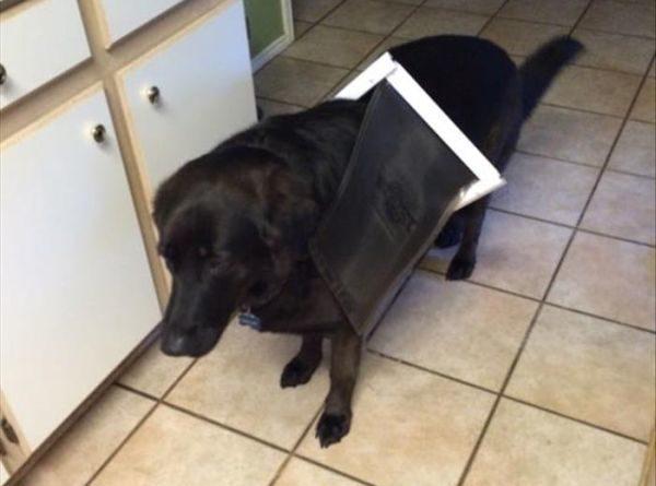 We Need New Doggy Door - Dog humor