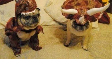Jurassic Pug - Dog humor
