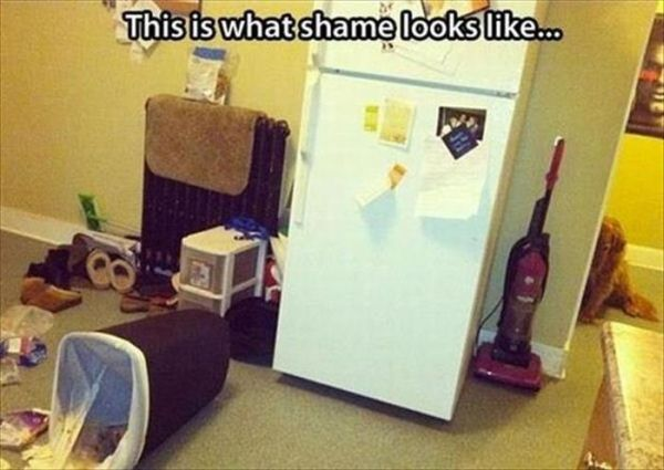This Is What Shame Looks Like... - Dog humor