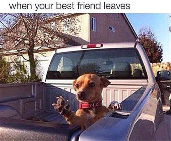 When Your Best Friend Leaves - Dog humor