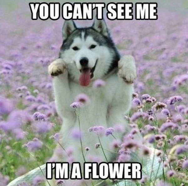 You Can't See Me - Dog humor