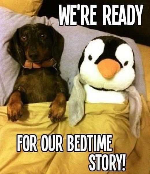 We're Ready For Our Bedtime Story - Dog humor