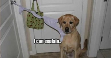 Busted! - Dog humor