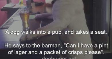 A Dog Walks Into a Pub - Dog humor
