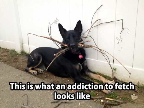 Addiction To Fetch - Dog humor