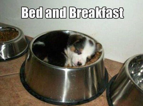 Bed And Breakfast - Dog humor