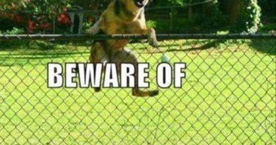 Too Late... - Dog humor